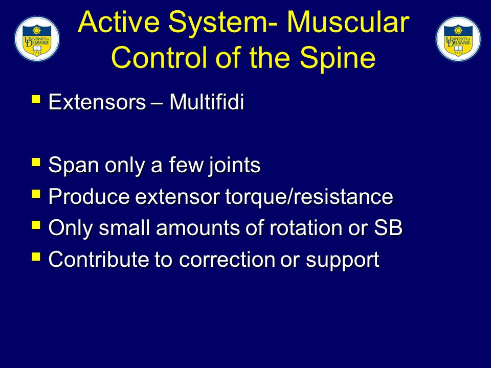 Active System- Muscular Control of the Spine