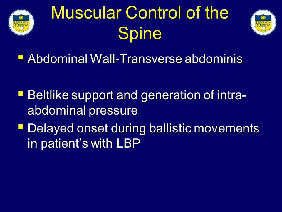 Muscular Control of the Spine