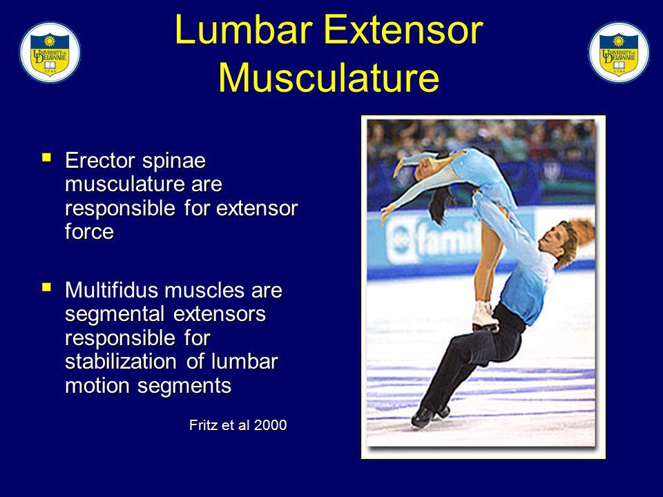 Lumbar Extensor Musculature