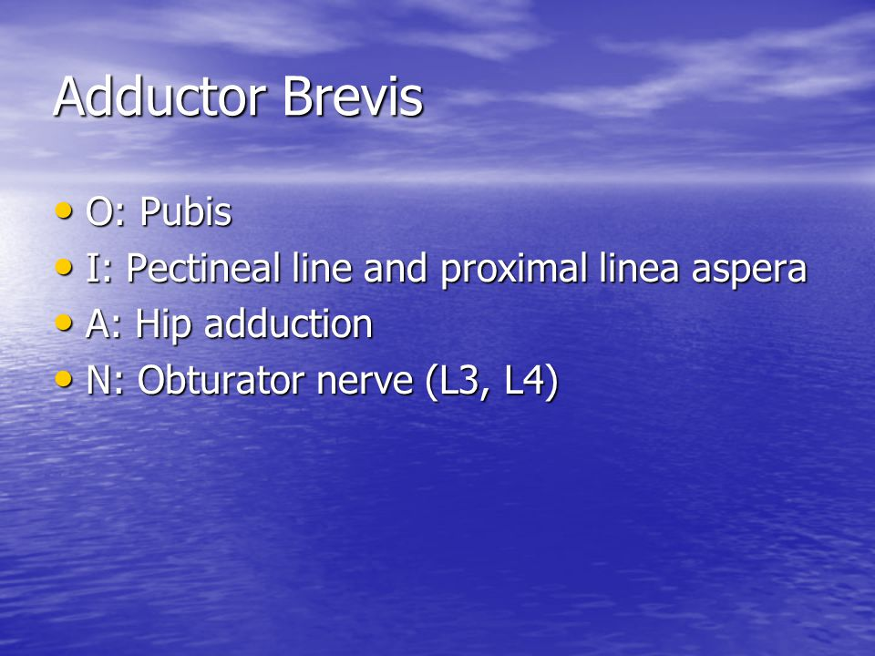 Adductor Brevis O: Pubis I: Pectineal line and proximal linea aspera