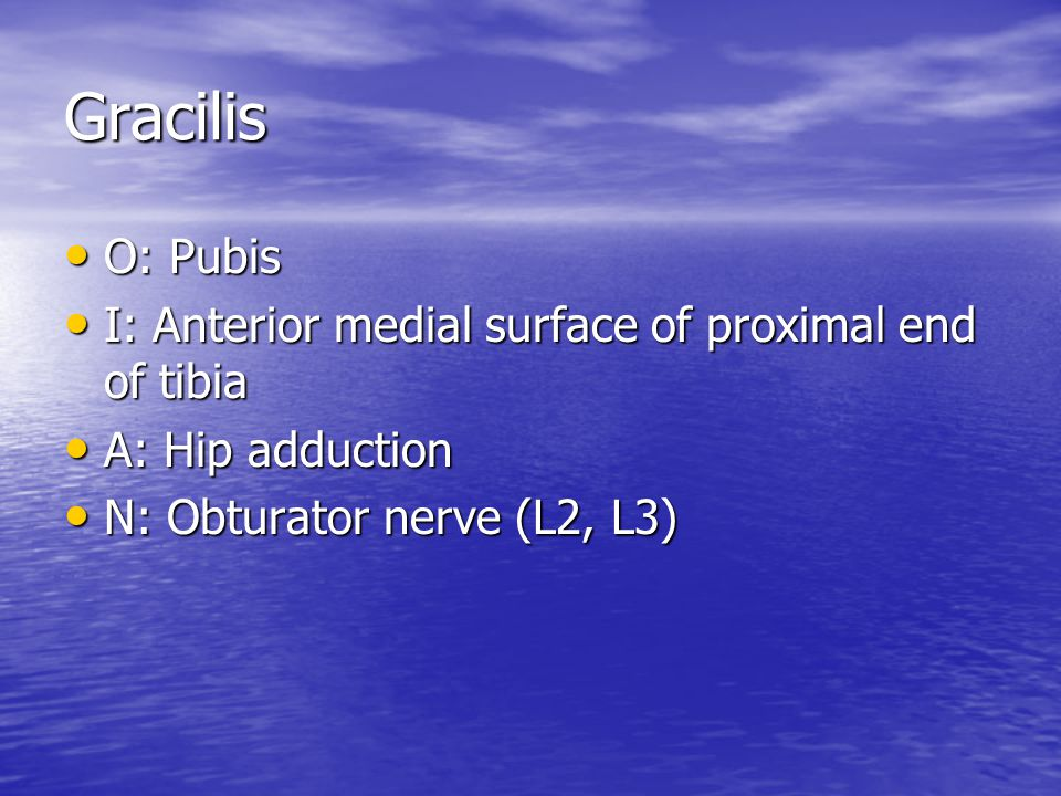 Gracilis O: Pubis I: Anterior medial surface of proximal end of tibia