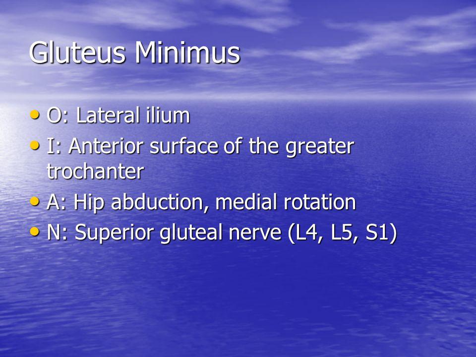 Gluteus Minimus O: Lateral ilium