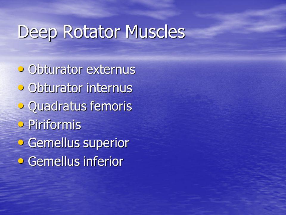 Deep Rotator Muscles Obturator externus Obturator internus