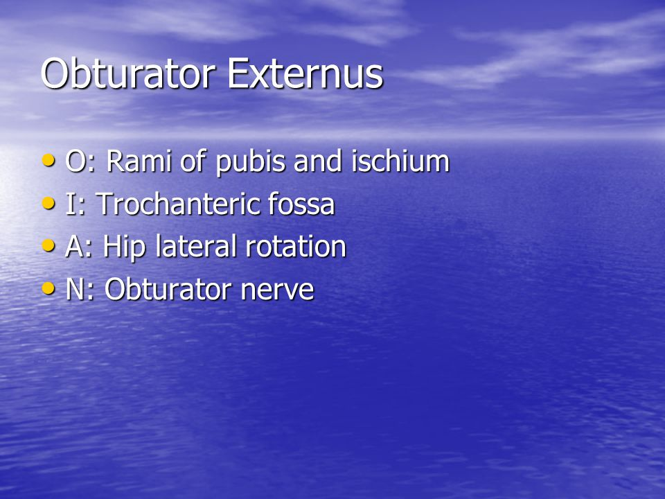 Obturator Externus O: Rami of pubis and ischium I: Trochanteric fossa