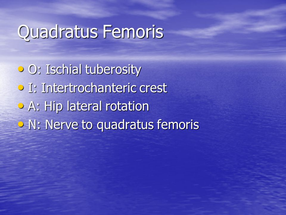 Quadratus Femoris O: Ischial tuberosity I: Intertrochanteric crest