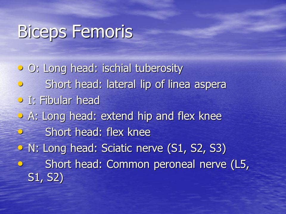 Biceps Femoris O: Long head: ischial tuberosity