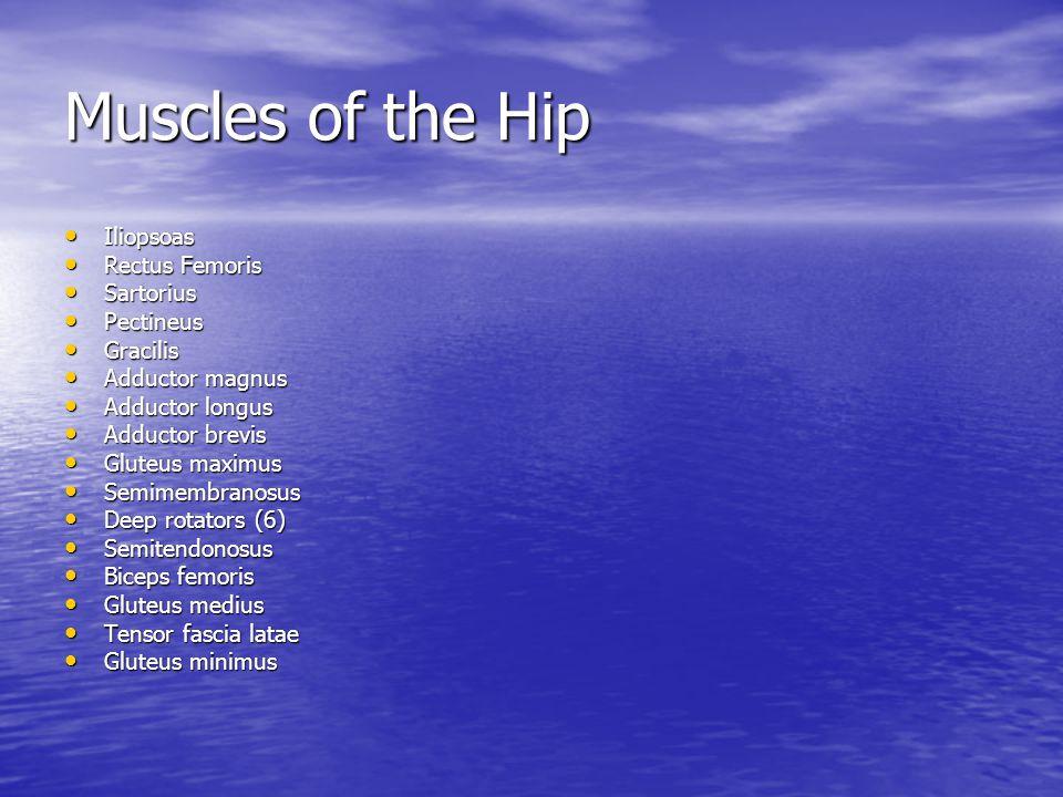 Muscles of the Hip Iliopsoas Rectus Femoris Sartorius Pectineus