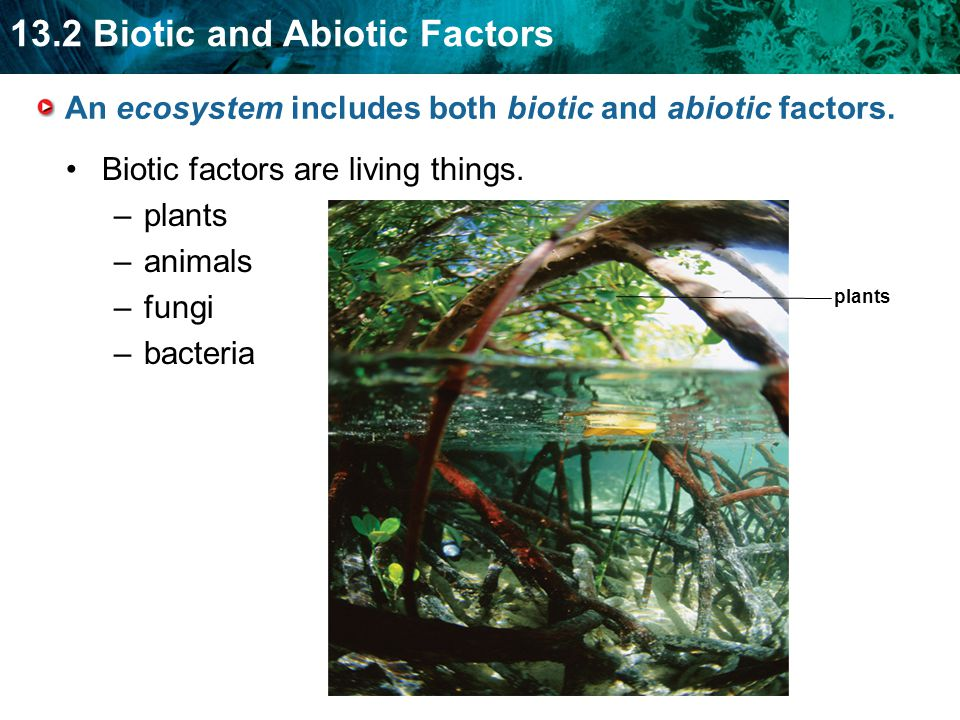 An ecosystem includes both biotic and abiotic factors.