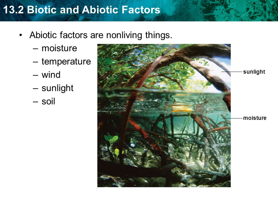 Abiotic factors are nonliving things. moisture temperature wind