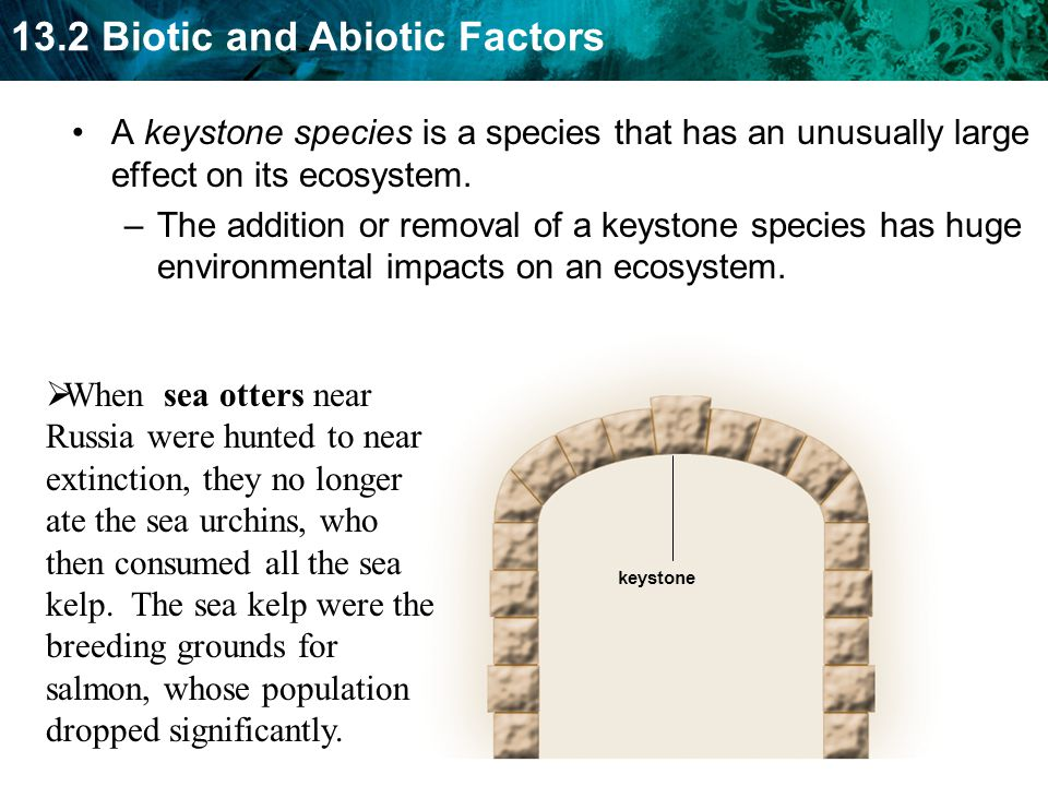 A keystone species is a species that has an unusually large effect on its ecosystem.