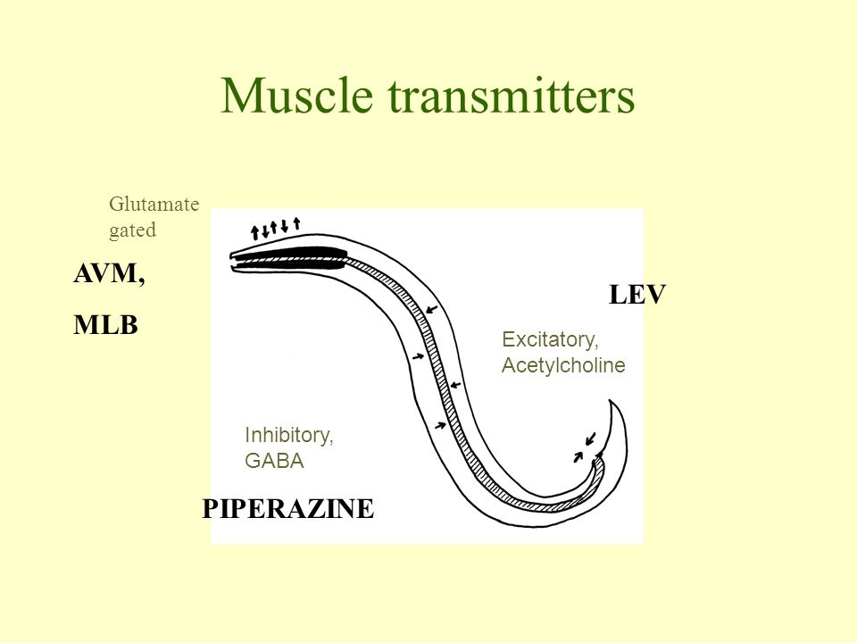 Muscle transmitters AVM, MLB LEV PIPERAZINE Glutamate gated