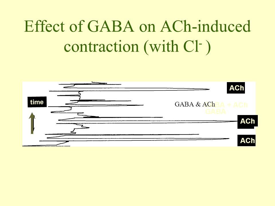 Effect of GABA on ACh-induced contraction (with Cl- )