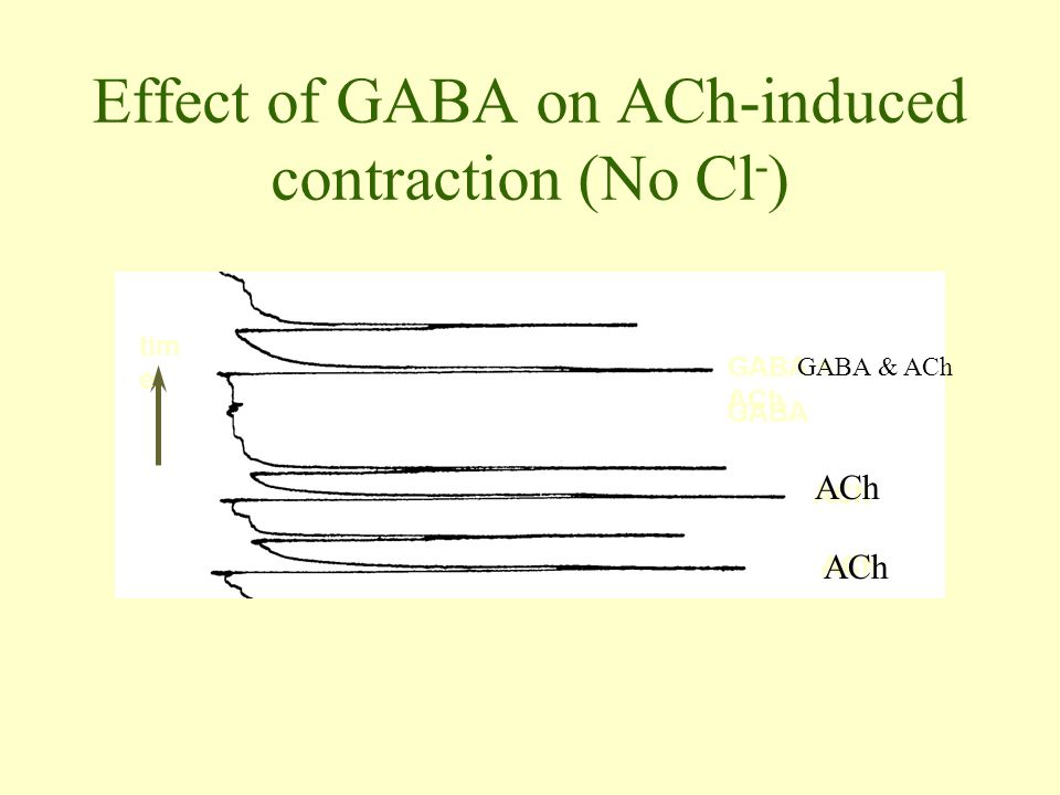 Effect of GABA on ACh-induced contraction (No Cl-)