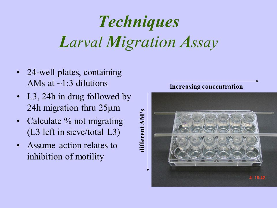 Techniques Larval Migration Assay