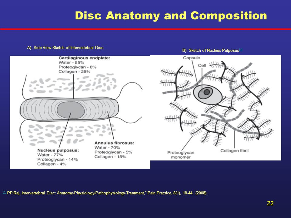 Disc Anatomy and Composition