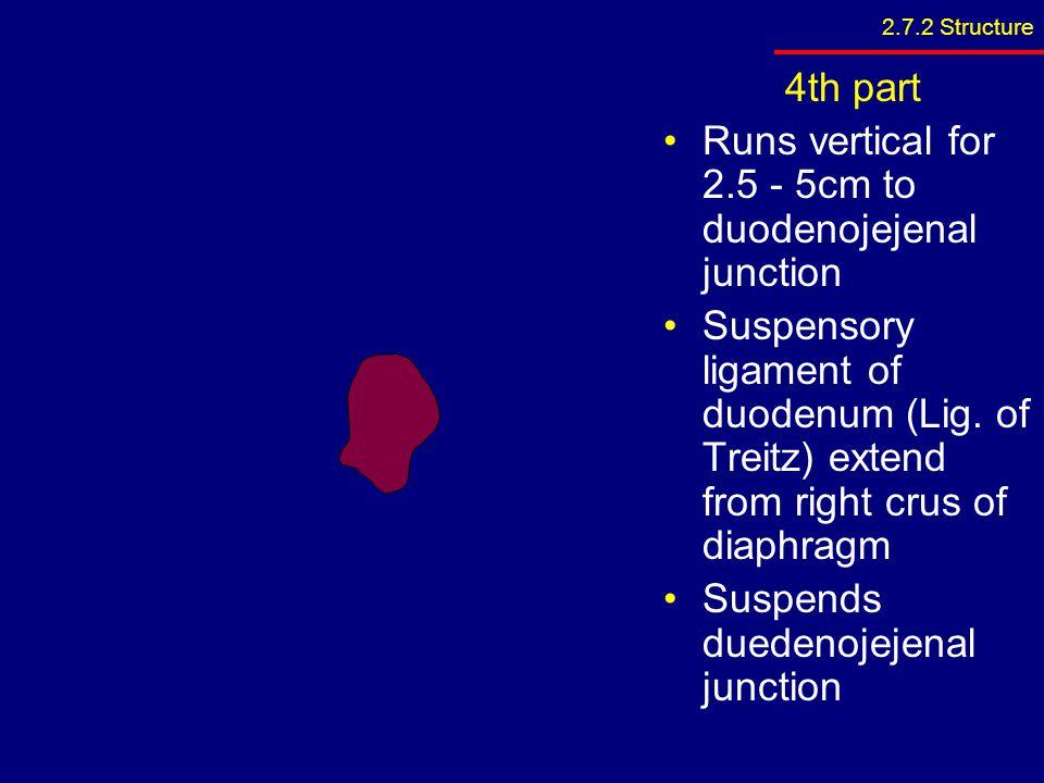 Runs vertical for 2.5 - 5cm to duodenojejenal junction