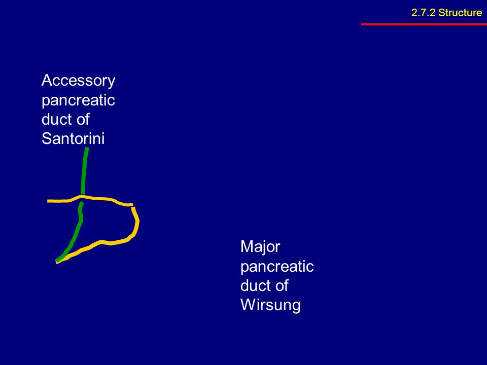 Accessory pancreatic duct of Santorini