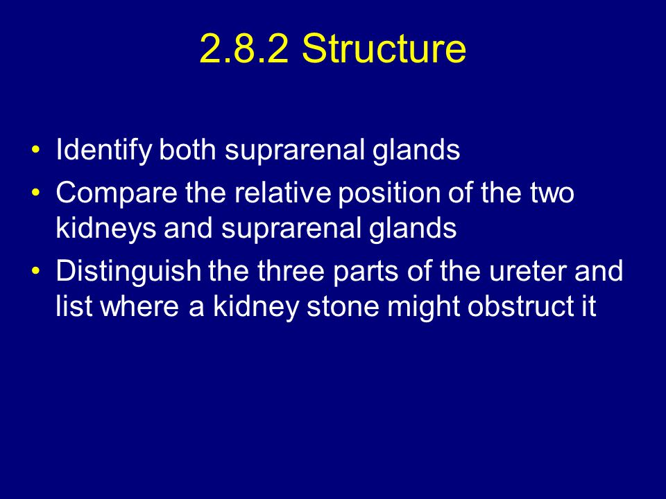 2.8.2 Structure Identify both suprarenal glands