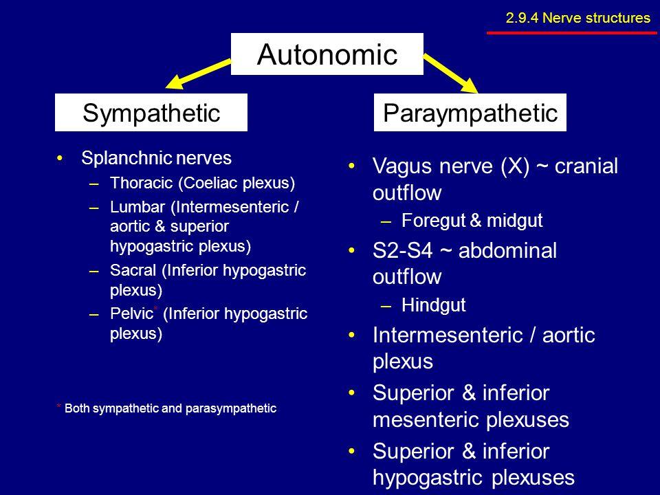 Autonomic Sympathetic Paraympathetic Vagus nerve (X) ~ cranial outflow