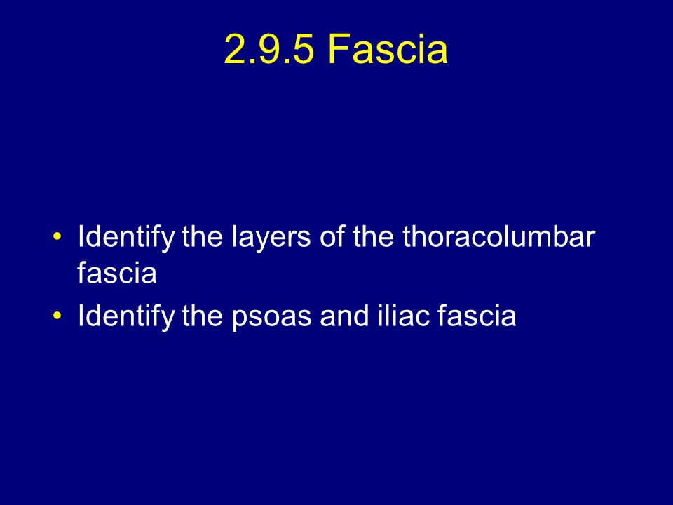 2.9.5 Fascia Identify the layers of the thoracolumbar fascia