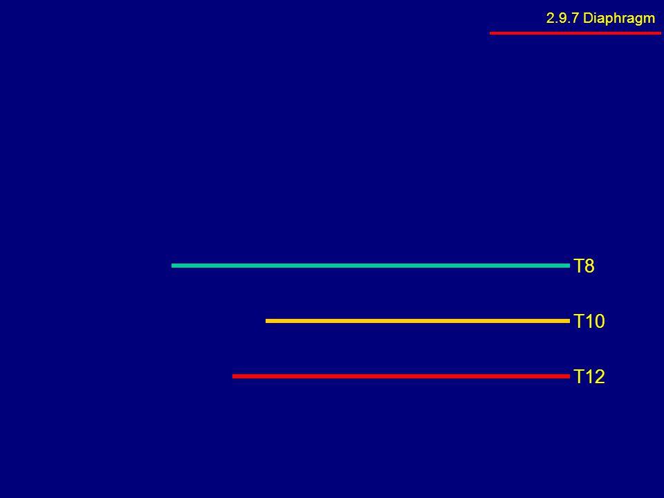 2.9.7 Diaphragm T8 T10 T12