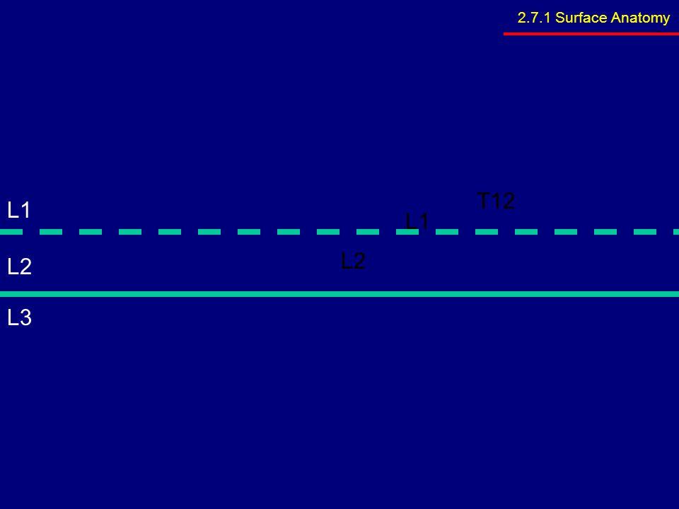 2.7.1 Surface Anatomy T12 L1 L1 L2 L2 L3
