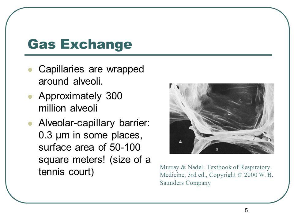 Gas Exchange Capillaries are wrapped around alveoli.