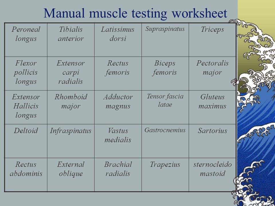 Manual muscle testing worksheet