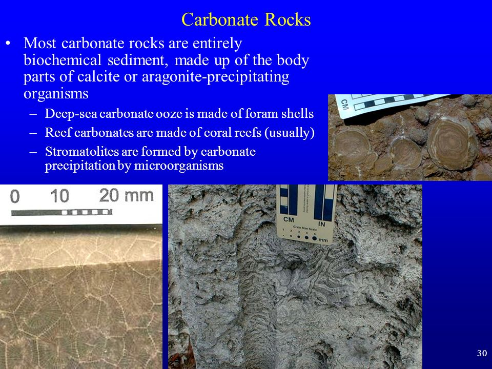 Carbonate Rocks Most carbonate rocks are entirely biochemical sediment, made up of the body parts of calcite or aragonite-precipitating organisms.