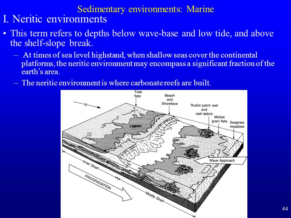 Sedimentary environments: Marine