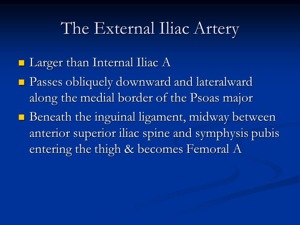 The External Iliac Artery