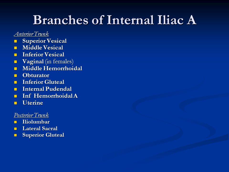 Branches of Internal Iliac A