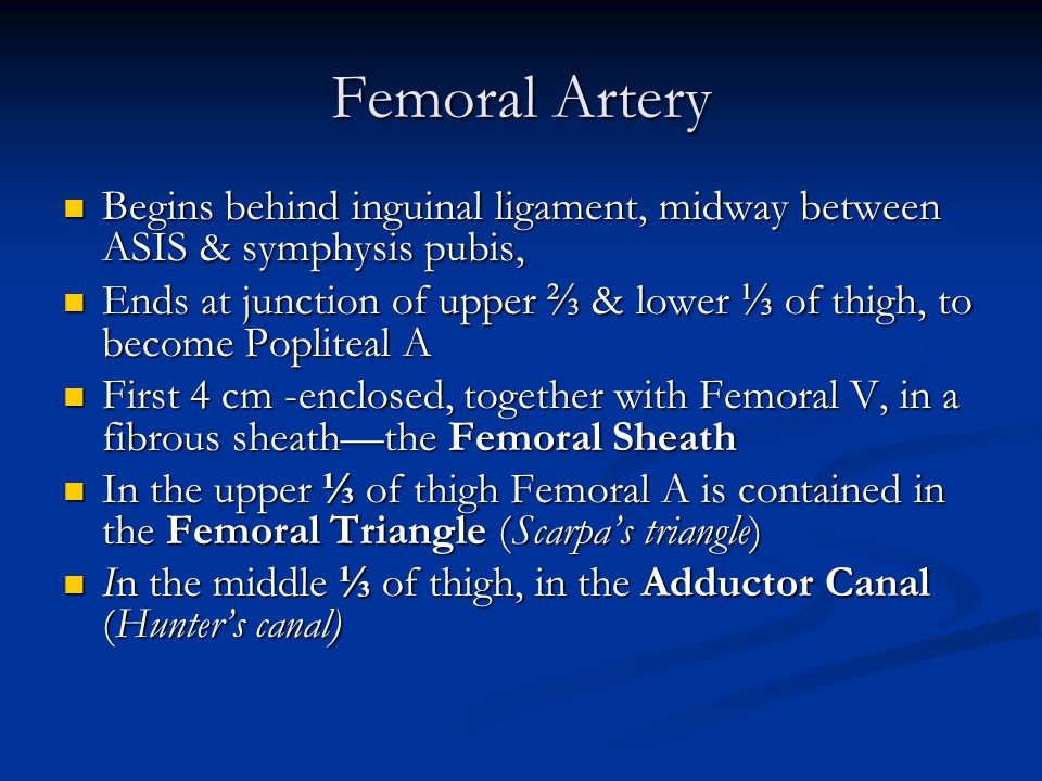 Femoral Artery Begins behind inguinal ligament, midway between ASIS & symphysis pubis,