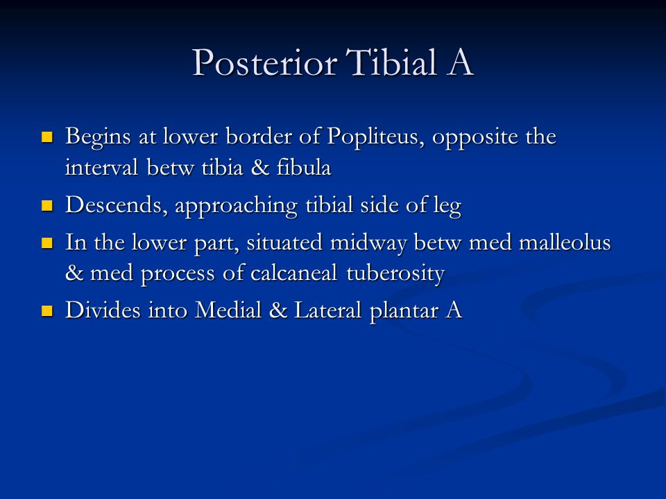 Posterior Tibial A Begins at lower border of Popliteus, opposite the interval betw tibia & fibula. Descends, approaching tibial side of leg.