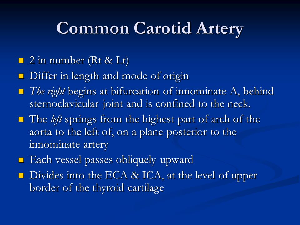Common Carotid Artery 2 in number (Rt & Lt)