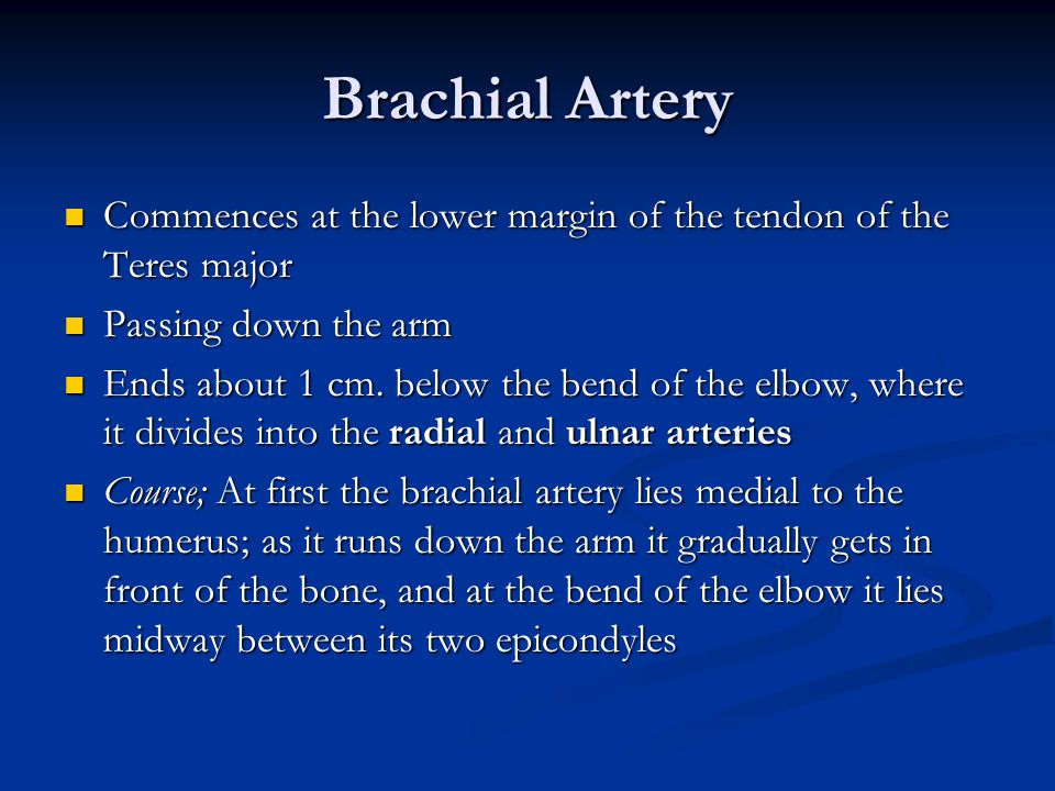 Brachial Artery Commences at the lower margin of the tendon of the Teres major. Passing down the arm.