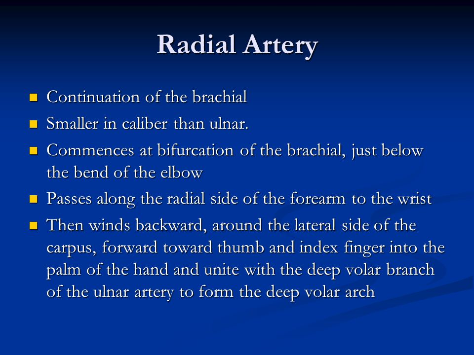 Radial Artery Continuation of the brachial