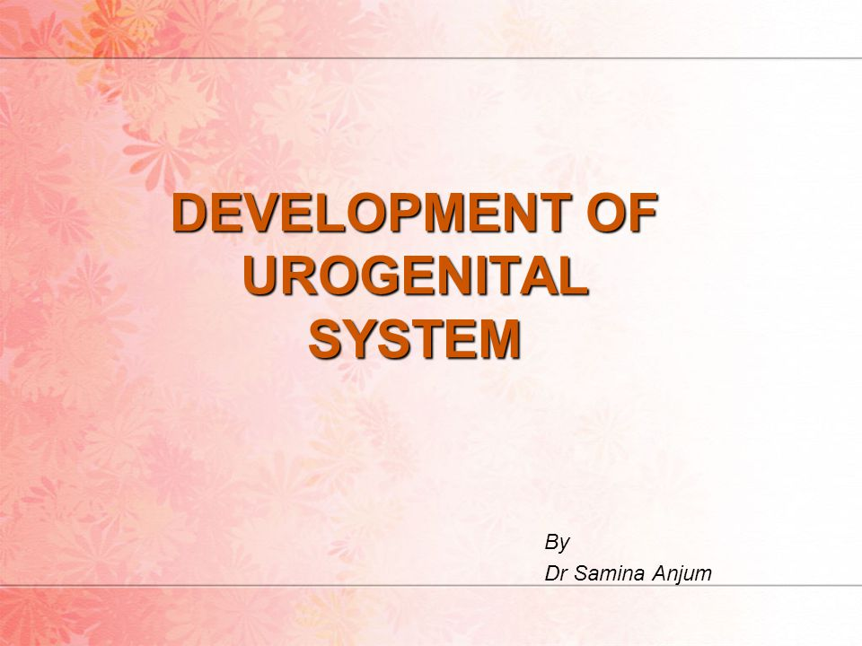 DEVELOPMENT OF UROGENITAL SYSTEM