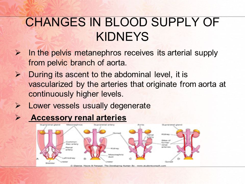 CHANGES IN BLOOD SUPPLY OF KIDNEYS