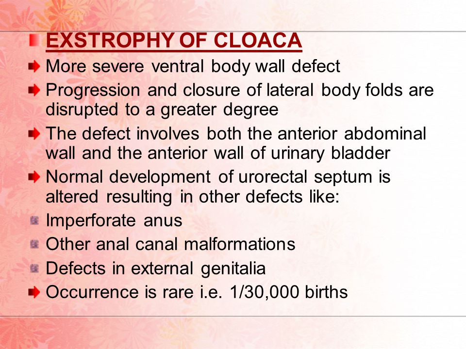 EXSTROPHY OF CLOACA More severe ventral body wall defect