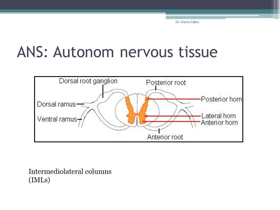 ANS: Autonom nervous tissue