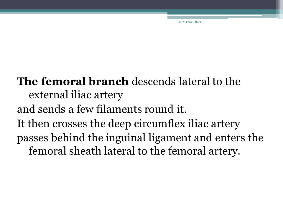 The femoral branch descends lateral to the external iliac artery