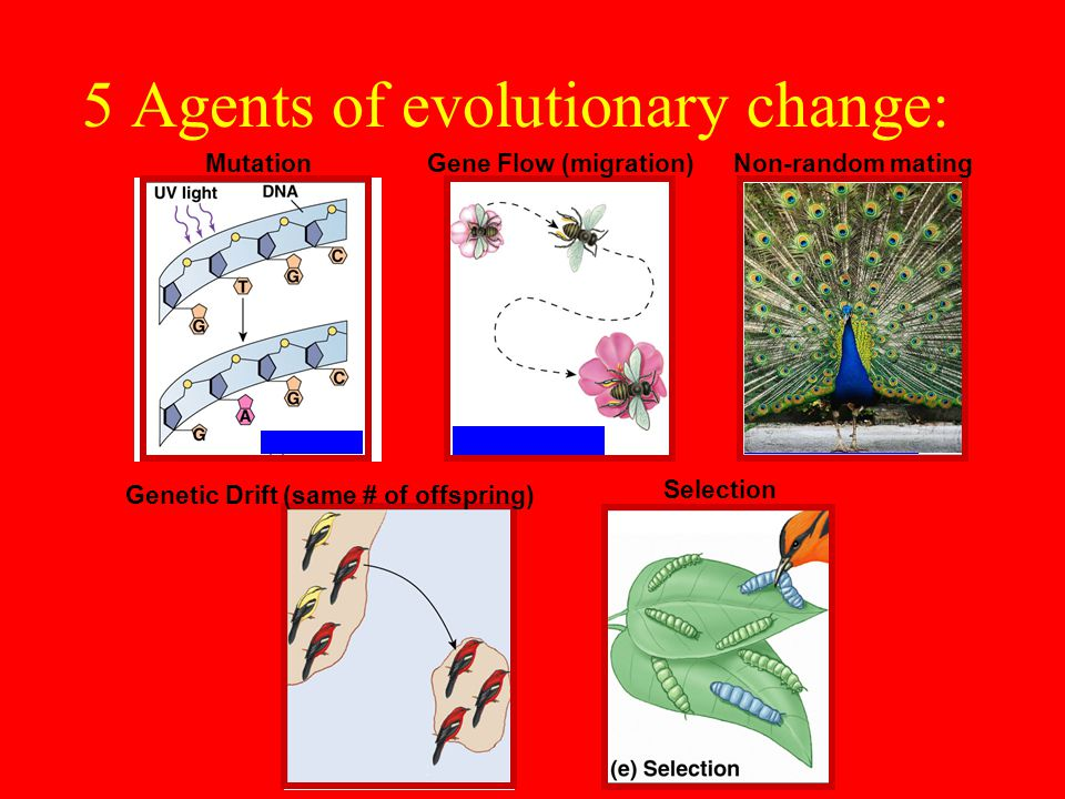 5 Agents of evolutionary change: