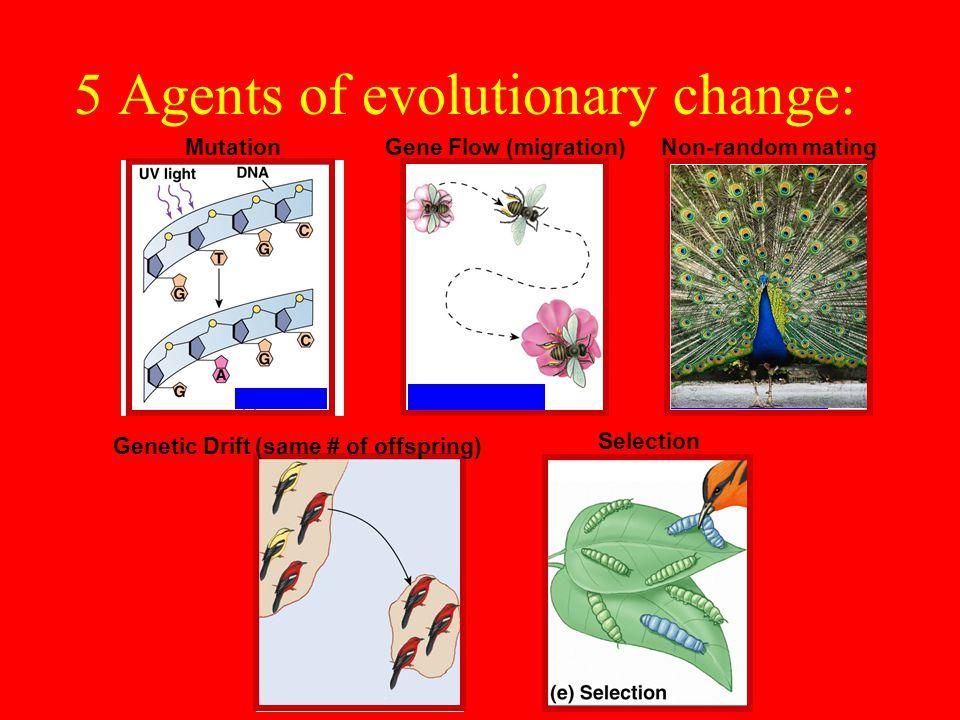 5 Agents of evolutionary change: