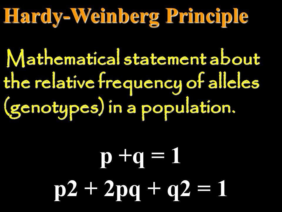 p +q = 1 p2 + 2pq + q2 = 1 Hardy-Weinberg Principle