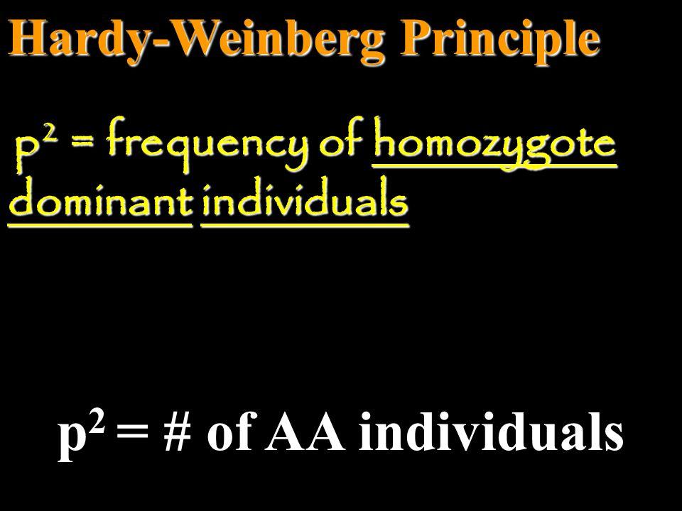 p2 = # of AA individuals Hardy-Weinberg Principle