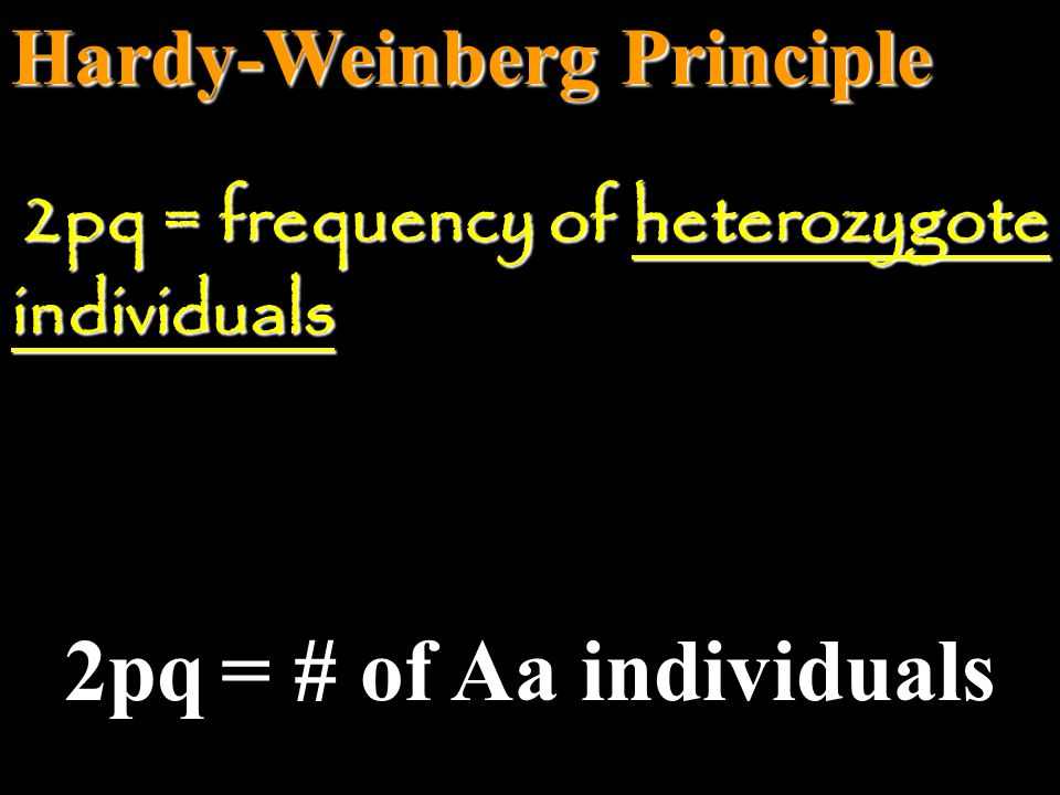 2pq = # of Aa individuals Hardy-Weinberg Principle