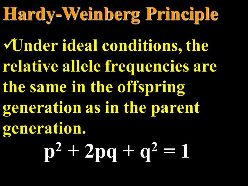 p2 + 2pq + q2 = 1 Hardy-Weinberg Principle