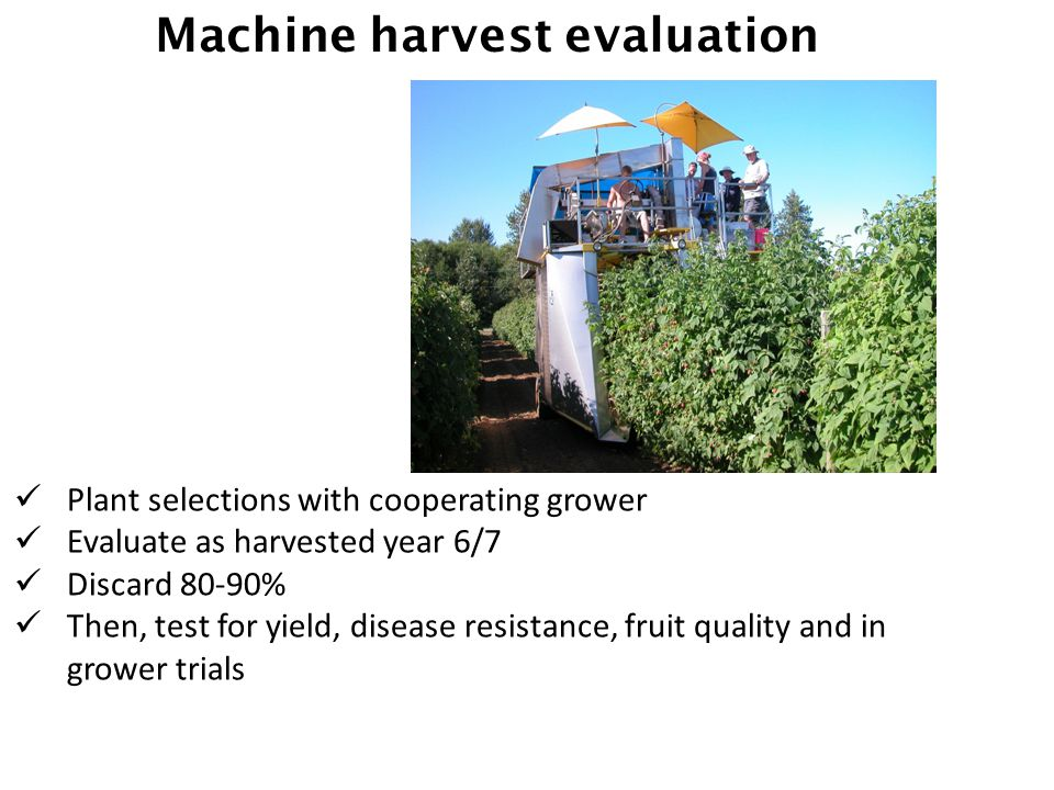 Machine harvest evaluation