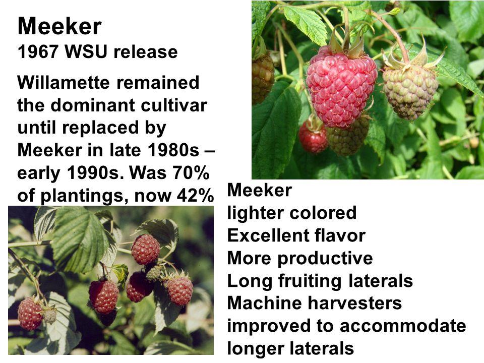 Meeker 1967 WSU release.